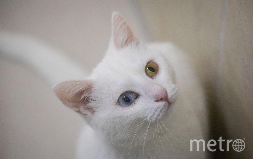 Москвич похитил кошек жены из-за квартиры. Фото Getty