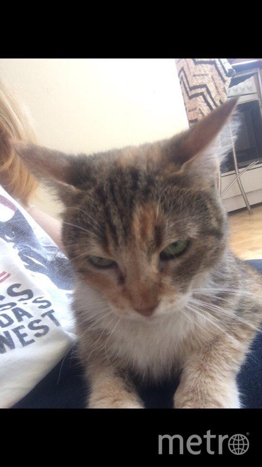Кошка Муся пропала после взрыва в доме на Народного Ополчения.