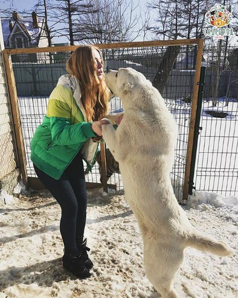 Среднеазиатская овчарка Эльза. Фото Скриншот Instagram: zoopark_vl