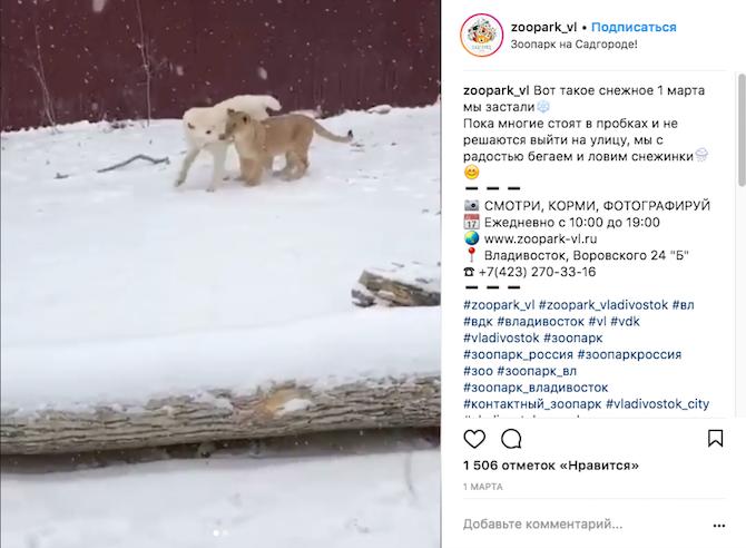 Львица Астра и овчарка Эльза. Фото Скриншот Instagram: zoopark_vl