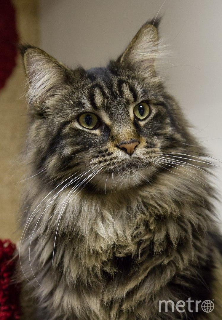 Республика кошек. Хэмингуэй. Фото vk.com/cats_republic, vk.com