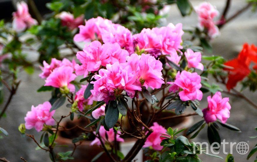 Ботенический сад / vk.com/botsad_spb. Фото Алевтина Здоровенина, vk.com