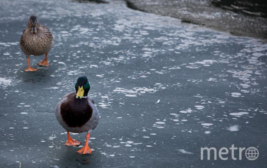 На Финском заливе двое мужчин провалились под лед. Фото Getty