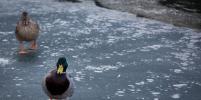 В Зеленогорске со льда спасли 10 рыбаков
