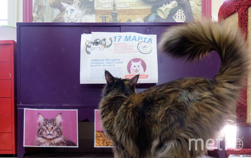 """В петербургской """"Республике кошек"""" прошли выборы. Фото Алена Бобрович, """"Metro"""""""