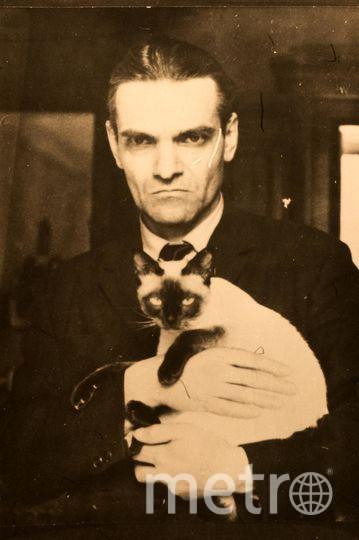 Помимо кошки Аси у Юрия Кнорозова были и другие усатые «соавторы». Коты любили не только работать, но и спать с учёным. Фото из архива семьи