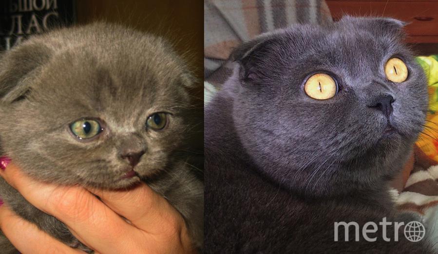 """Наш красивый, благородный,гордый """"мужчина"""" Мартин . 1 месяц,сейчас нашему желтоглазому красавцу 6 лет. Петров Дмитрий и Смирнова Ксения."""