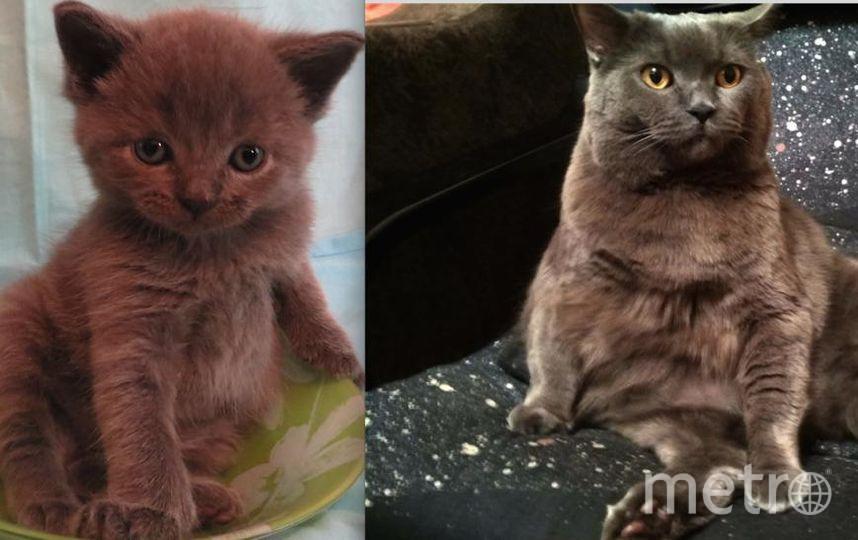 Это наш кот Алекс, больше всего он любит поесть и поспать! На первом фото ему 1 месяц, на втором 4 года.. Фото Наталья Шевцова