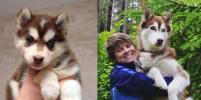 Смешные фото собак и кошек: конкурс