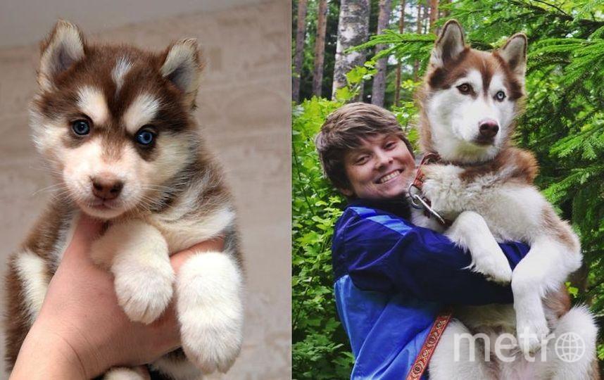 Это наш пес Оскар! На первом фото ему 1.5 месяца, маленький плюшевый комочек, на втором 2 года, не отказывается посидеть на ручках у хозяйки! Анна.
