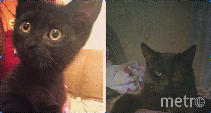 Этого малыша летом я нашла в лифте своего дома и не смогла пройти мимо... Было ему тогда около двух месяцев. Поначалу пыталась пристроить в добрые руки, т.к. со мной уже живет взрослый кот Тишка. Но в итоге оставила себе. Теперь это любимец всей семьи по имени Блэк. Фото слева он двухмесячный, справа он семимесячный.