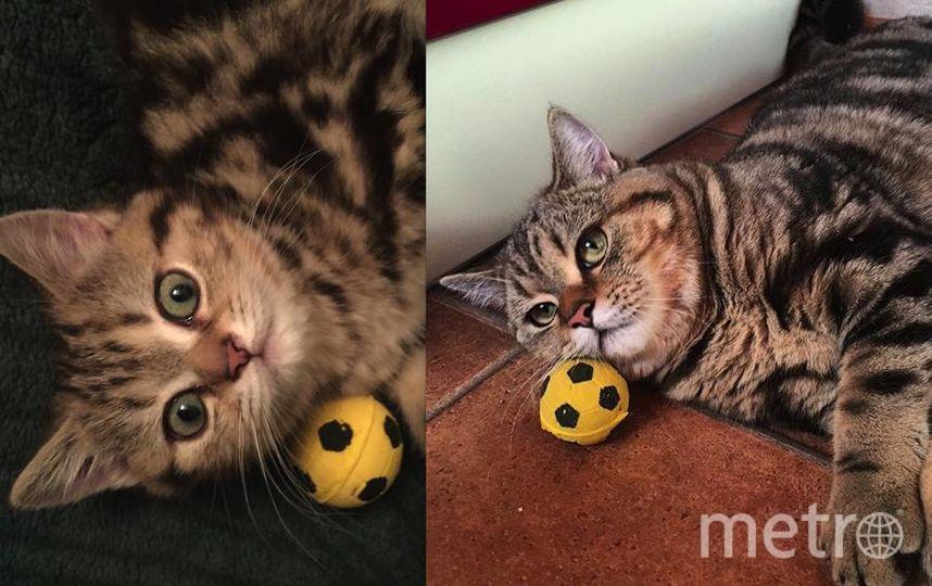 Нашего котика зовут Гоша, он же Жора, он же Гога :) Он озорной, веселый и очень хитрый кот. Как все коты, Гошка любит вкусно поесть и долго поспать. На первом фото ему 3 месяца, на втором фото 1,5 года..