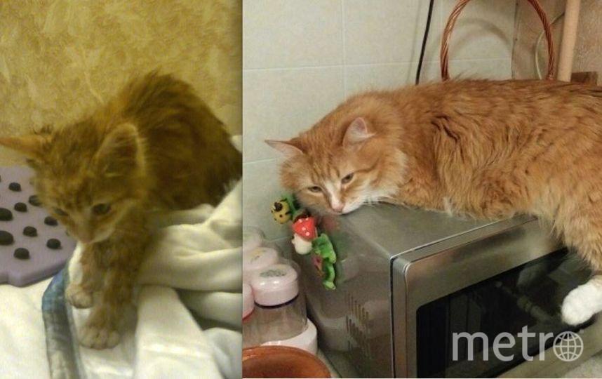 На фото мой котик, которого зовут Кузя. На первом фото ему два месяца, а на втором 7 лет. Мы нашли его на улице и принесли домой (на первом фото), он живет у нас уже семь лет, сейчас он такой, как на втором фото. Он очень хороший и добрый котик. Фото Людмила Владиленовна.