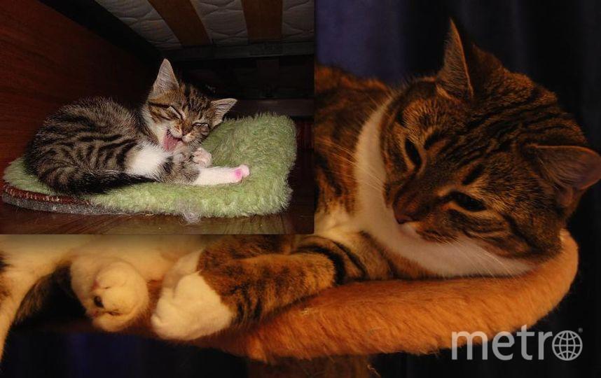 Знакомьтесь - Матильда! Её взяла моя дочь в приюте 30 декабря 2009 года, а 31 декабря, когда весь народ готовиться встретить наступающий 2010 год, мы обнаружили что у неё лишай, а у нас ещё есть один кот. Ужас!. Фото Юлия.