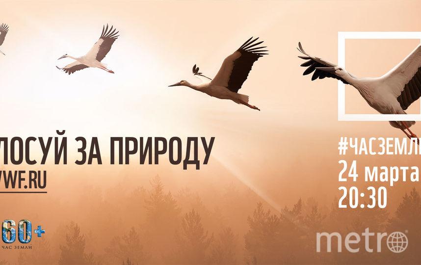 """Акция """"Час Земли"""". Фото Предоставлено пресс-службой WWF России"""