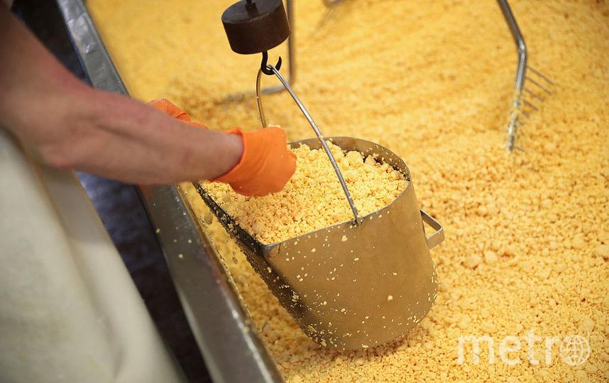 Производство сыра. Фото Getty