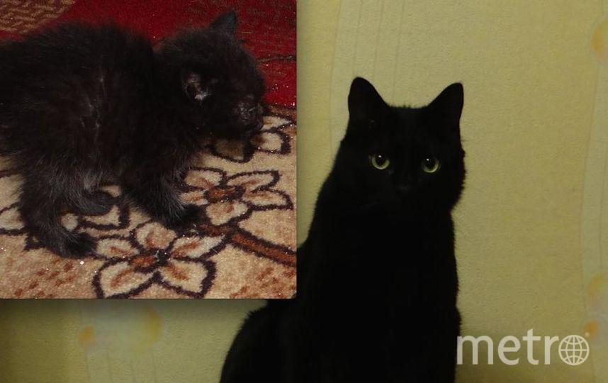 Моему коту 5 лет. В детстве питомец был больше похож на летучую мышь, чем на котенка, за что и получил кличку Бэтмен. Он еще тот кровопийца - будет мяукать до тех пор, пока его вкусно не накормят. Любит внимание и ласку. Фото Альбина