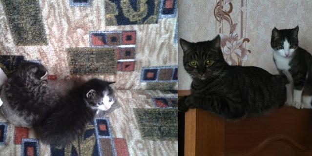 История появления в нашей семье этих замечательных котов немного грустная, но со счастливым концом.