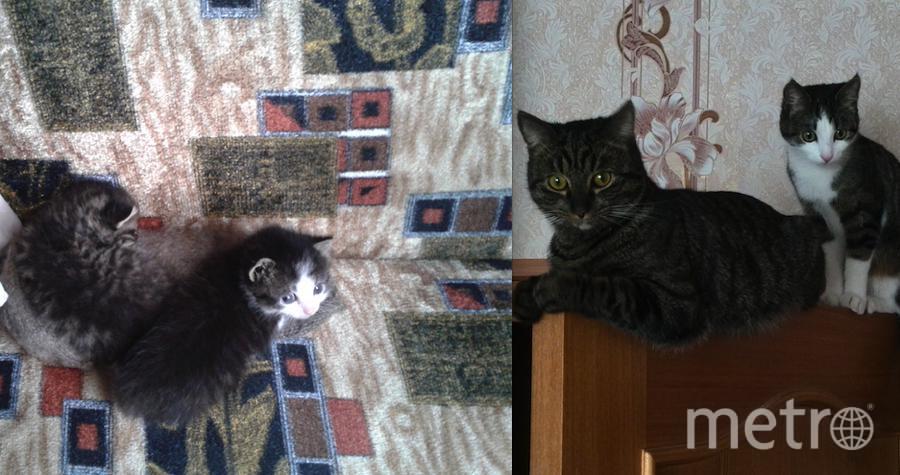 История появления в нашей семье этих замечательных котов немного грустная, но со счастливым концом. Фото Екатерина Петраш