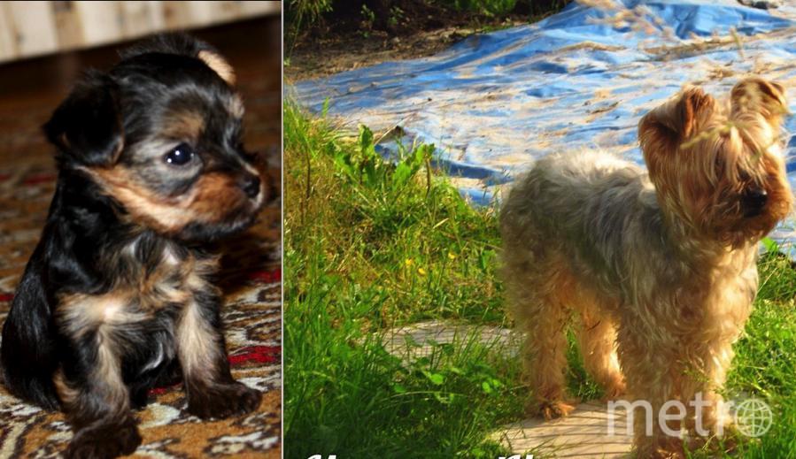 Нашему мальчику Митя, в этом году Юбилей-15 лет!!! Охременко Алексей и Анжелика.