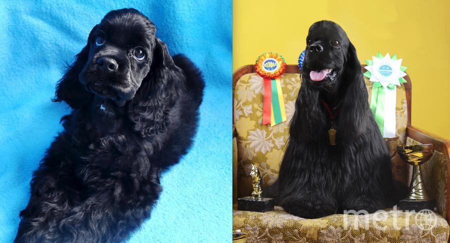 "Винс! Собака в 4-х месячном возрасте и ""почти 3 годика"". Фото Алтухова Нина."