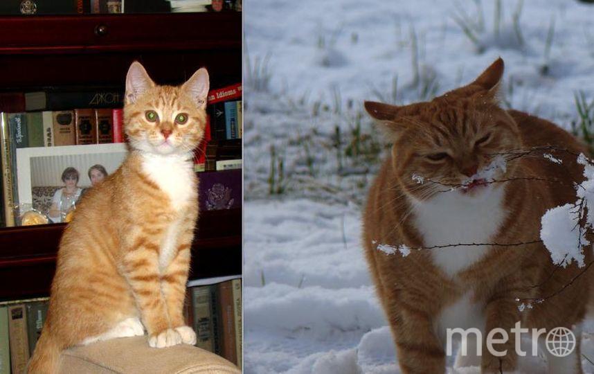 Чуть больше трех лет назад у нас в доме появился рыжий красавец, которого мы решили назвать Лорд - уж очень свысока он смотрел на окружающих. На фотографии ему 2 месяца и 28 дней. Это рыжее чудо росло-росло, и вот - что выросло, то выросло... Лорд, находясь на даче, впервые увидел снег, который в Питере неожиданно выпал в мае 2017 года. В мае 2017 года Лорду было 2 года и 4 месяца. Фото Елизавета Павлова