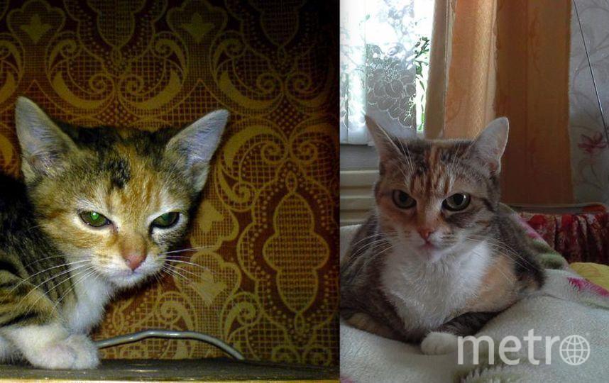 """Это моя кошечка МАША . На первом фото ей около двух недель . Сейчас почти 11 лет . Из """"гадкого утенка"""" превратилась в красивую и ласковую кошку . Порода : чистокровный дворянин. Фото Виктор ."""