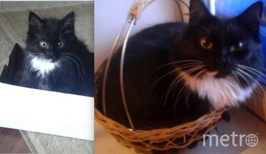 Эту шкодницу зовут Рысь. Маленькой на фото ей 3 месяца, а большой уже год. Филиппова Алина.