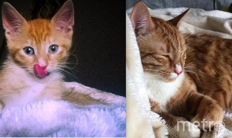 Наш метис Лис. От 1 месяца до 2х лет не меняется ничего! Любимые позы сна,и все та же фотогеничность. Юлия Никонорова.