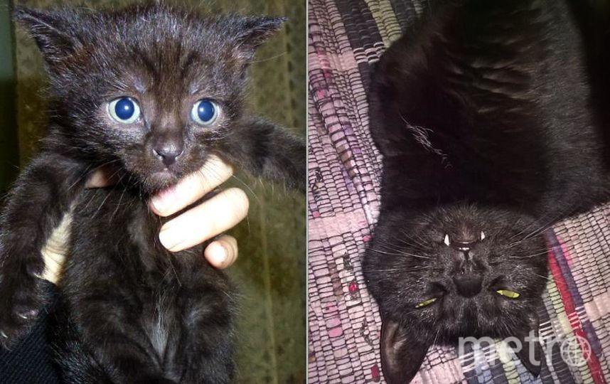 Хочу рассказать о своей любимице, кошке Бусёне 5 лет. На первом снимке ей 24 дня и в этот день я уже знала, что она будет жить в моей семье. Прошло 5 лет и она превратилась в грациозное, ласковое и своенравное животное. У нее очаровательная улыбка вампирёныша (фото 2, 3). Фото Ольга