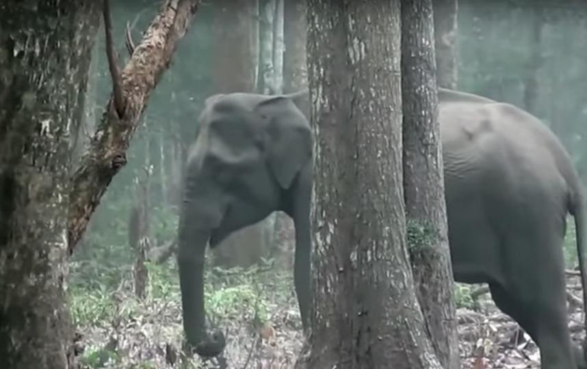Слониха, извергающая дым. Фото Скриншот Youtube