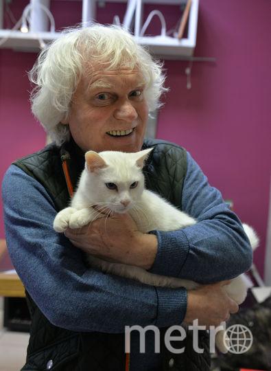 Республика кошек. Фото Республика Кошек vk.com/cats_republic, vk.com