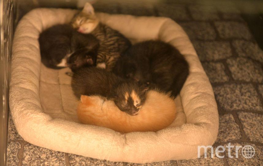 Первые обитатели Республики Котят. Фото Республика Кошек vk.com/cats_republic, vk.com