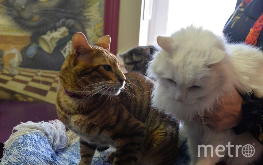 Поль Сезанн и Валлен Деламот. Фото Республика Кошек vk.com/cats_republic, vk.com