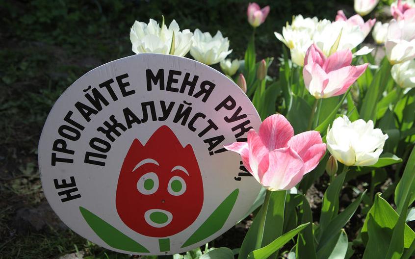 """Фестиваль тюльпанов в предыдущие годы. Фото Фотоархив, Святослав Акимов., """"Metro"""""""