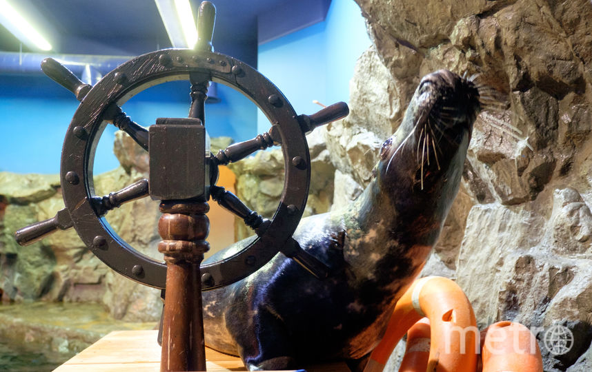 "Тюлени в океанариуме. Фото Алена Бобрович, ""Metro"""