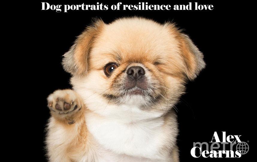 Фотохудожник показал животных, которые радуются каждому моменту жизни вопреки обстоятельствам. Фото Alex Cearns