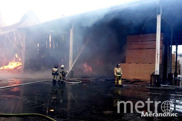 Пожар на деревообрабатывающем складе под Петербургом охватил 2000 кв. метров. Фото www.megapolisonline.ru