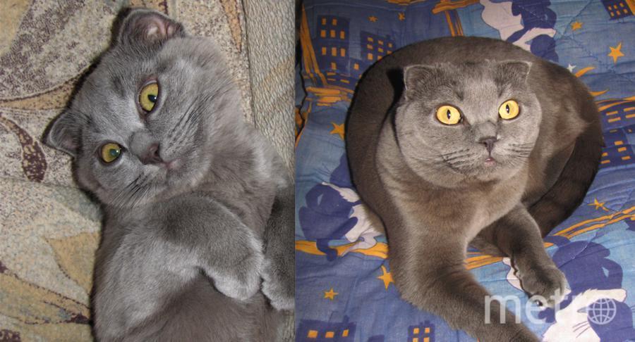 Клеопатра-самая озорная и непоседливая кошка на свете! Наша любимица и просто красавица. На первой фотографии ей 4 месяца, на второй 3 года. Фото Ольга Алехина