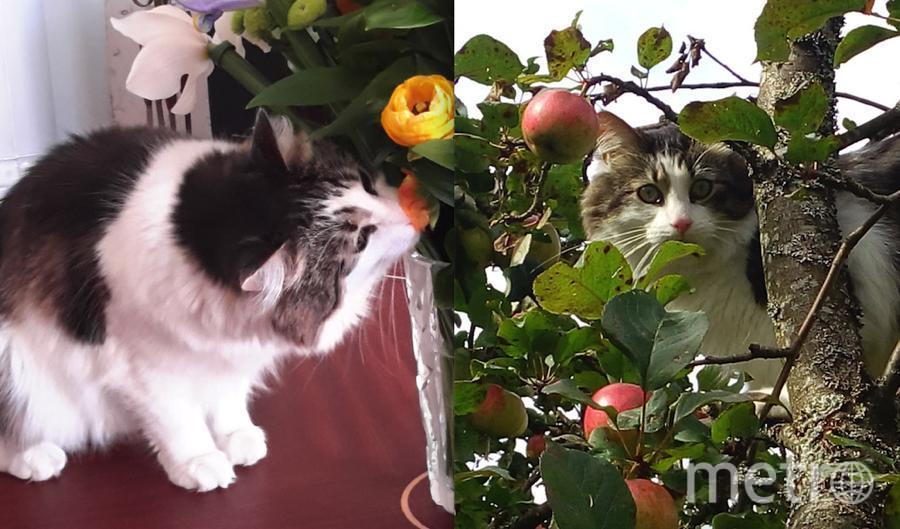 «От цветочков до ягодок 2 года!» Это наш любимый ТИШКА! Летом любит лазить по деревьям и как белка может прыгать с ветки на ветку. Валерий Александрович..