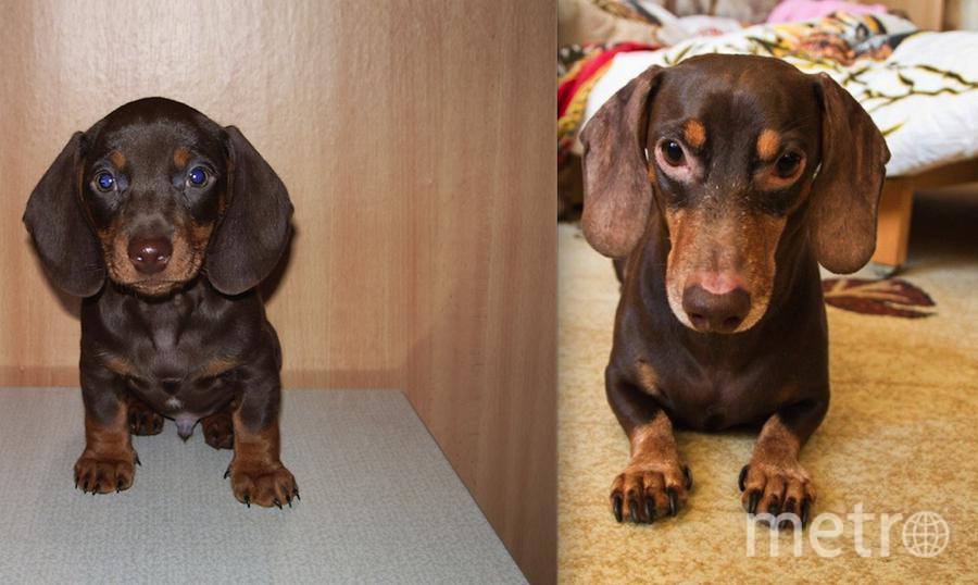 Вот есть пес – зовут Кузьмой. Издревле уже известно – Кузьма покорный домовой.. Фото Шихмарева А.В.