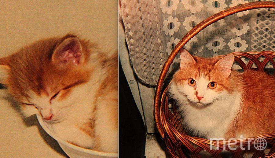 На первой фотографии кошечке Марте 6 недель. Это её первый день в нашем доме. Выросла она настоящей красавицей. На второй фотографии Марте 12 лет. Увы, два года назад нашей любимицы не стало. Новую питомицу мы заводить не хотим, так как второй такой не будет.. Фото Ирина Иващенко