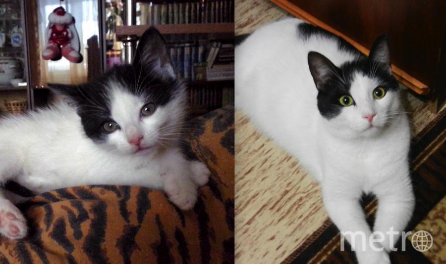 Мой красавец Кузя. Первое фото - ему пара месяцев. Второе - полтора года. Кузя вырос, а забавная привычка скрещивать лапки осталась....