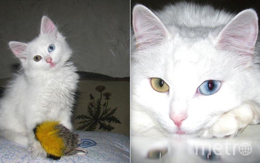 Ну кто же предполагал, что эта белобрысая двухмесячная малышка Пуська превратится в роскошную вальяжную красотку Аполлинарию, на фото ей уже 6 лет.. Фото Сергей Петляков
