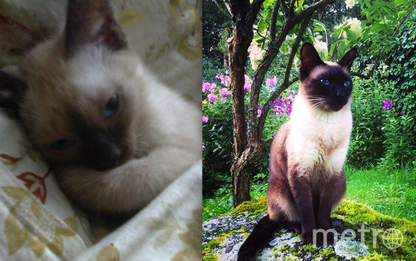 меня зовут Юлия, а на фото наше чадо, сиамский кот, зовут Марсель, ему сейчас 4 года, а когда то был совсем малюсенький и беленький, фото в детстве прилагаются!!!! Он с характером, хулиганистый, в обиду себя не даст и одновременно очень ласков к хозяевам.
