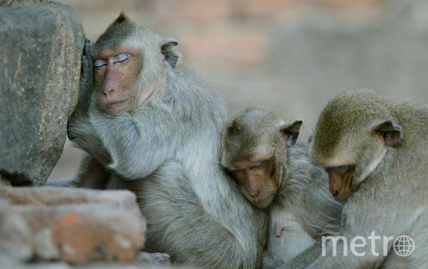 ВИндии полицейские разыскивают обезьяну, похитившую малыша
