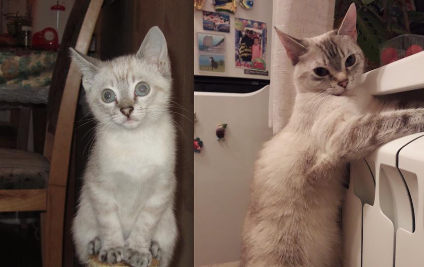 Нашу кошечку зовут Бася. Мы принесли ее с улицы, когда ей было 2 месяца. Она была маленькая и пугливая. Сейчас нашей красавице и любимице 6 лет.