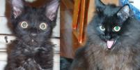 Как милые котята превращаются в вальяжных котов: фото