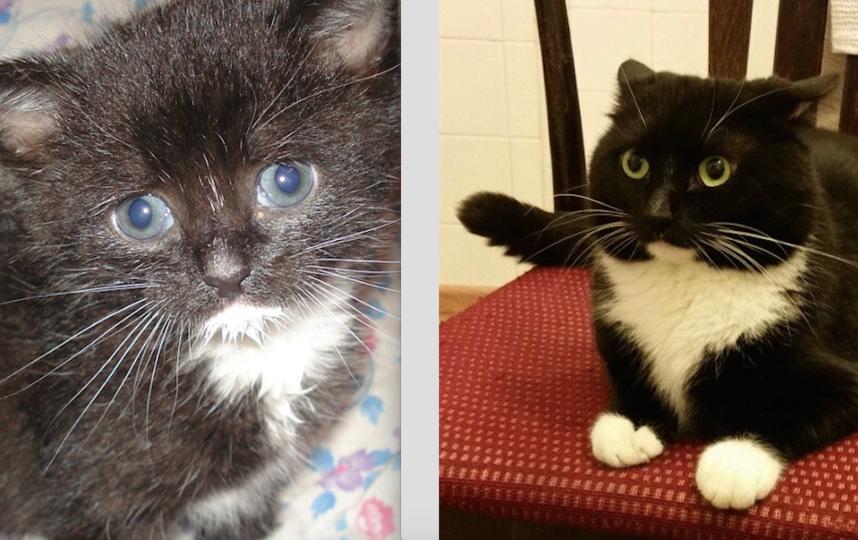 """""""ВЫРОСЛО"""" 2 недели и 5 лет. Мой самый любимый котёнок Лунтик. Он очень добрый. Самый любимый и самый красивый. Любит коробки и пакеты. Фото Евгения"""
