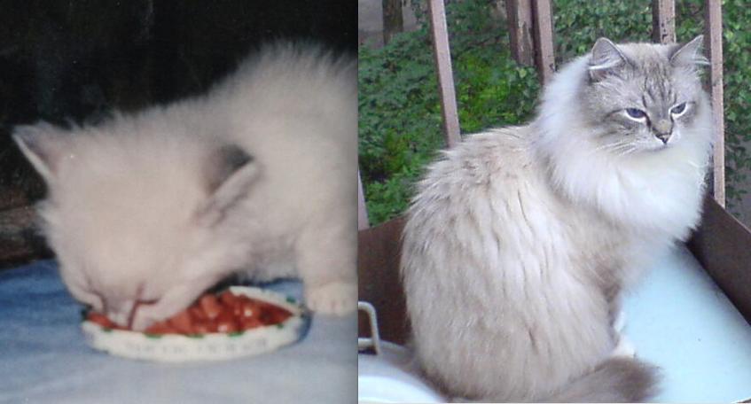 Это наш Тимофей! Серьёзный мальчик и наш любимчик. Ему уже 15 лет, возраст солидный.